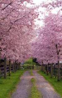 free spring landscape screensaver for windows 7 free spring themed