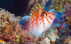 Tropical Fish Calendar Windows Theme